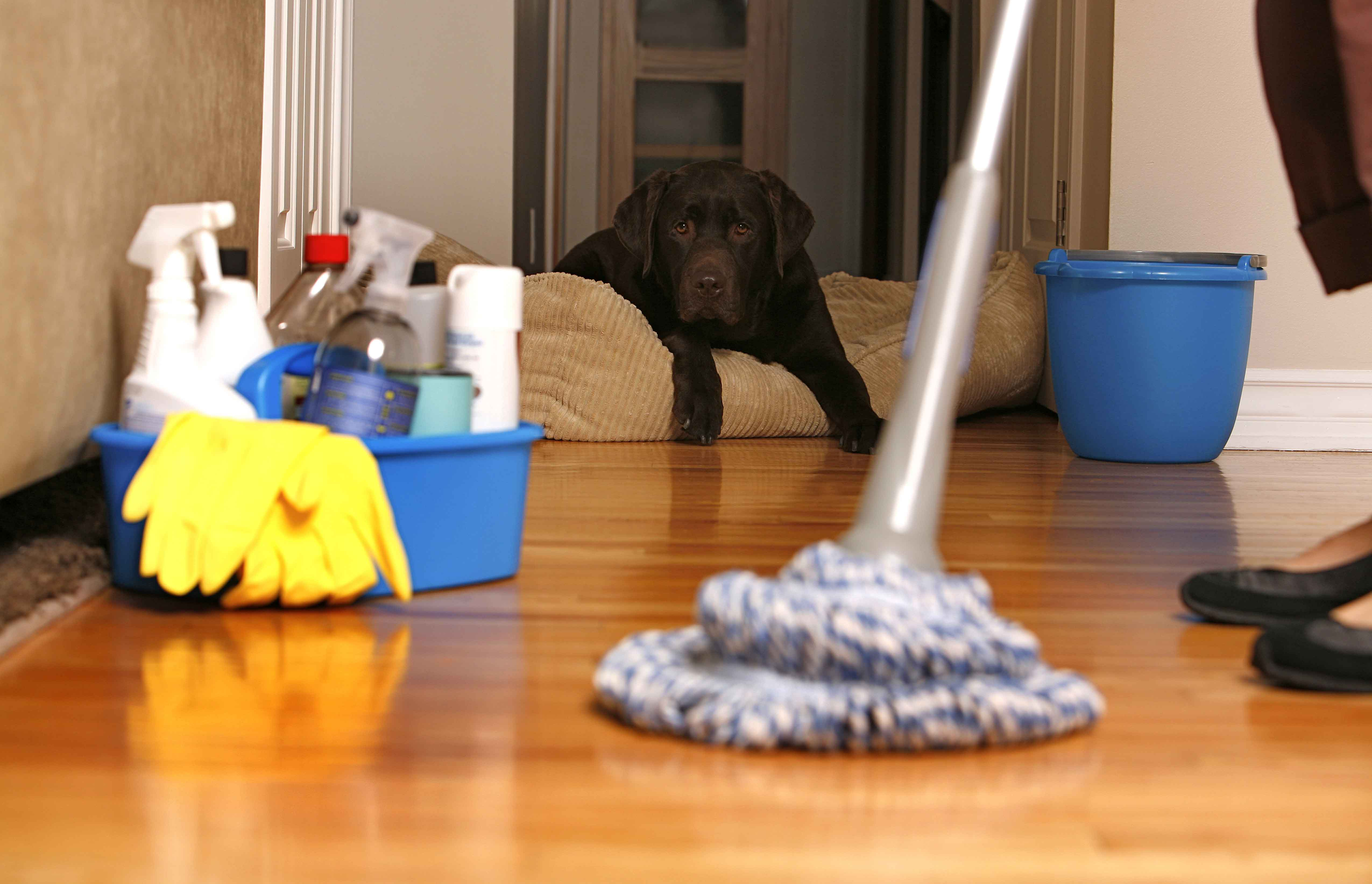Prep Your Pets for In-Home Workers